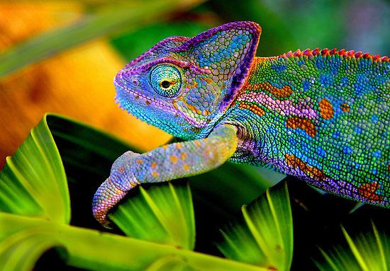 Chameleon Paints, Powders